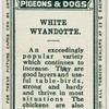 White wyandotte.