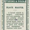Black magpie.