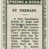 St. Bernard.