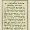 Bass or sea-perch (Family: Serranidae).
