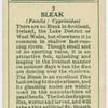 Bleak (Family: Cyprinidae).