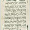 Harvesting tobacco.