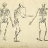 Three poses of skeleton.]