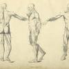 Three poses of musculature.]
