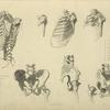 [Seven views of bones of ribcage and pelvis.]