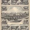 "Devom Cow, Helena. ; Devon Cow, Nemophila. ; Devon Bull, Queen Anne's Huron. ; "" Devon Hill Stock Farm. "" Res. of Walter Cole, ( Bethany TP.) P.O. Batavia, Genesee County, N.Y. ; Lovely's Huron 4th. ; Georgiana 4th. ; Lovely 18th."
