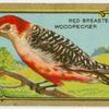 The Woodpecker.