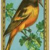 The Baltimore Oriole.