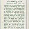 Canterbury Bell.