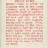 Single pinks.