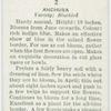 Anchusa.