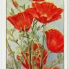 Garden flowers by Richard Sudell