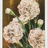 Garden flowers - new varieties