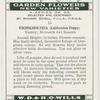 Eschischoltzia (California Poppy.)