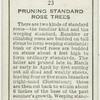 Pruning standard rose trees.