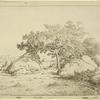 Le cerisier de la plante à Biau
