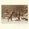 Jaguar, New York Zoological Park (Bronx Zoo), 1883.]