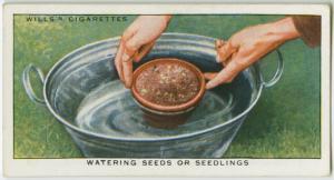 Watering seeds or seedlings. Digital ID: 1603224. New York Public Library