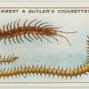 Centipedes.