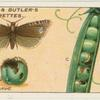 Pea moth and larvae.