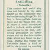 Snail-slug.