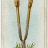 Dividing a root.