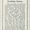 Budding roses.