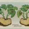Dividing begonias.