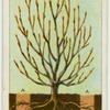 Root-pruning.