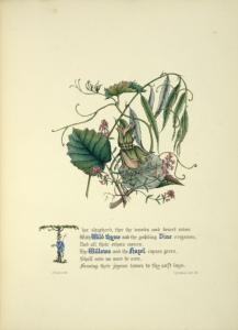 [Wild Thyme, Vine, Willows and... Digital ID: 1610152. New York Public Library