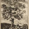 Arbor Genealogiæ Noëticæ.