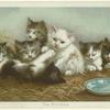 The Kittens (10)