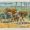 Belgian dog transport.
