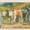 Oxen hauling Servian artllery.