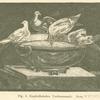 Kapitolinisches Taubenmosaik