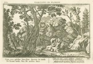 Narcissus in Florem.