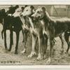 The Grehound - 1.