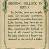 Schoeing bullock in Sembia.