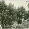 Men standing among peach trees on land settlement in Durham California