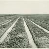 California, Irrigation, Imperial Valley, Calif.