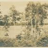 Birch Lakeshore, Lake Sunapee, N.H.