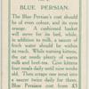 Blue persian.