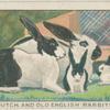 Dutch and English rabbits.