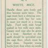 White mice.