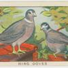 Ring doves.