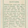 Bantams.
