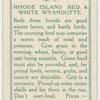 Rhode Island Red & White Wyandotte.