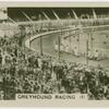 Greyhound racing (1).