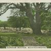 Burnham beeches, Buckinghamshire.