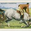 Helping horse after stumbling: correct method.